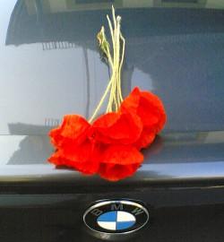 Mohn auf BMW