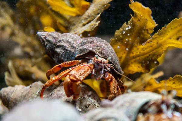Aquarium Lofoten