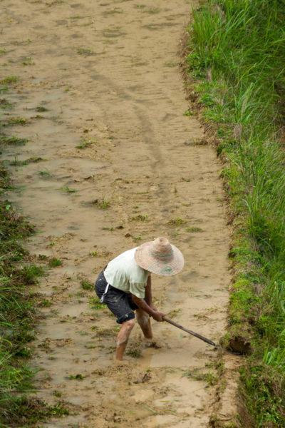 Reisarbeiter, Dazhai, China, Dragon's Backbone