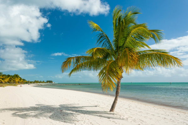 Strand, Palme, Key West, Florida