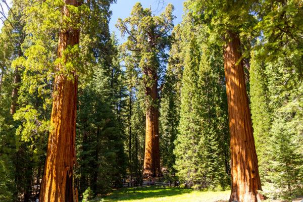 Sequoia National Park, General Sherman