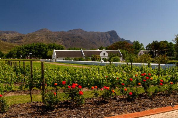 Weingut, Südafrika, La Motte