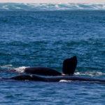 Hermanus – Mekka der Wale