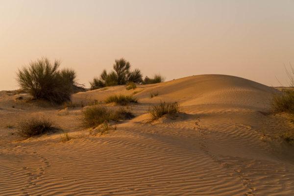 Sunset Tour Dubai