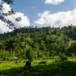 Dschungelwanderung bei Puerto Plata