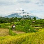Weihnachten und Silvester auf Bali