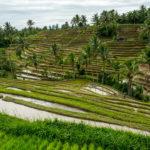 Ubud, das Zentrum der Reisterassen