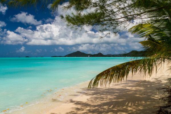 Antigua, Strand, Palme